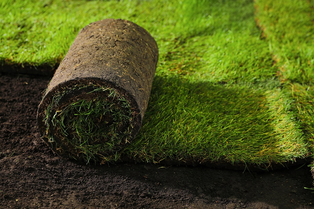 Planting Grass Seed vs. Laying Sod
